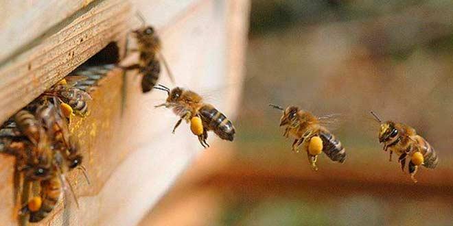 ¿Qué tareas realiza un apicultor?