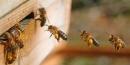 Infraestructura básica para apicultura