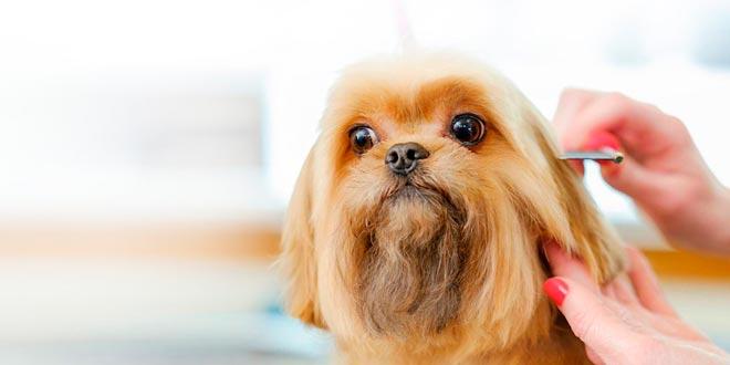 Consejos de peluquería canina sobre el cepillado
