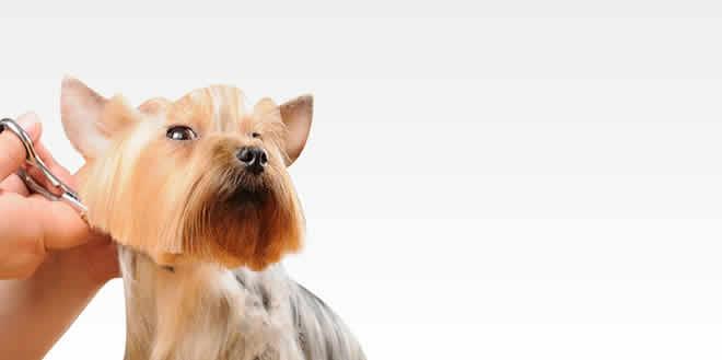 Cursos en La Plata de Peluquería Canina