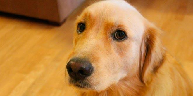 El baño del perro en una peluquería canina