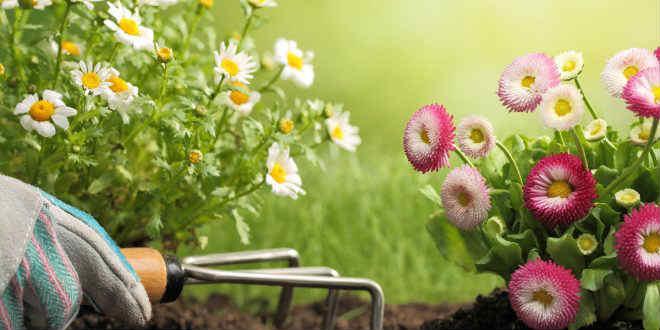C mo plantar hierbas arom ticas fude for Aprender jardineria