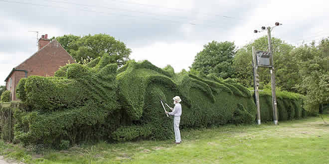 La cerca viva en jardinería y paisajismo