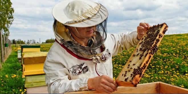 Cursos a distancia de apicultura
