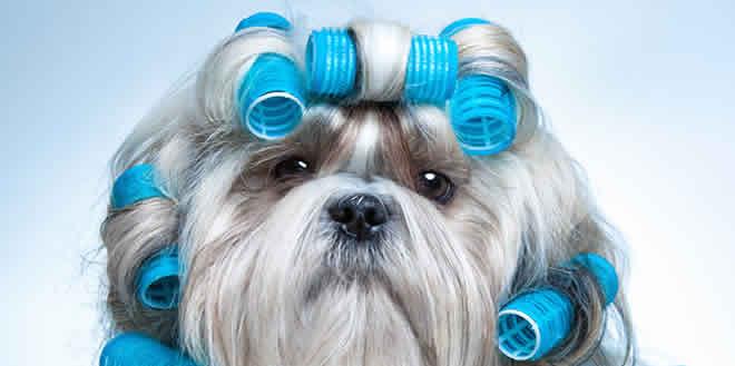 Peluquería canina: lo que todo profesional debe saber