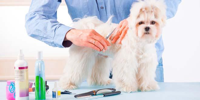 Cortes de pelo para perros de raza