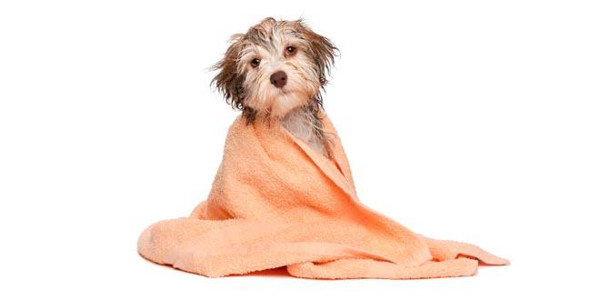 Cursos online de peluquería canina