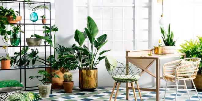 Consejos de jardineria para cuidar tus plantas de interior