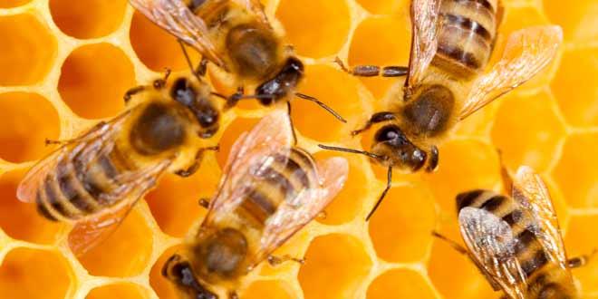 Curiosidades de la apicultura