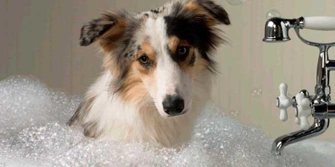 Prácticos consejos sobre cómo bañar a las mascotas