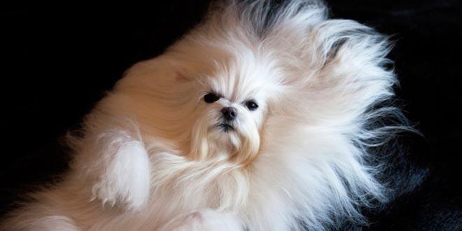 Qué tener en cuenta al momento de abrir una peluqueria canina