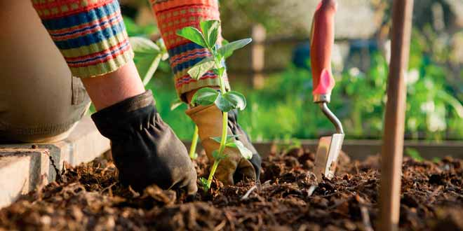 Consejos de jardineria para principiantes | FUDE