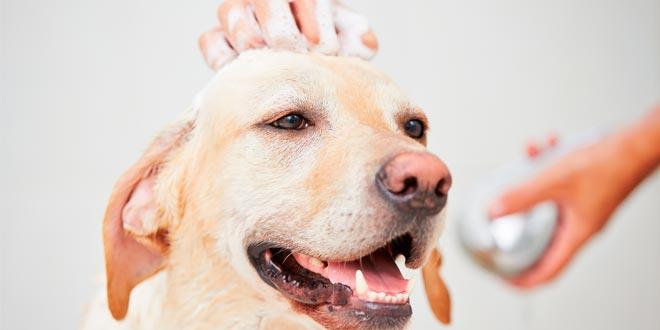 Cursos cortos de peluquería canina