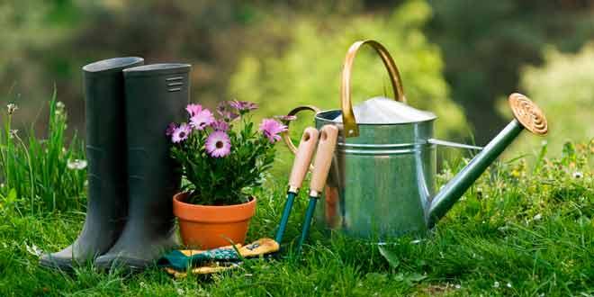 Jardinería fácil para principiantes