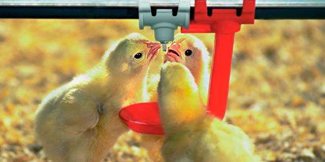 Avicultura y tecnología