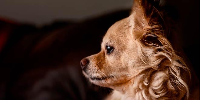 La importancia de la peluqueria canina