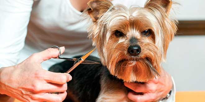 Cuales son los beneficios de llevar a las mascotas a una peluquería canina
