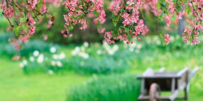 La jardinería y su función decoradora