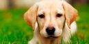 ¿Qué tareas se realizan en una peluquería canina?