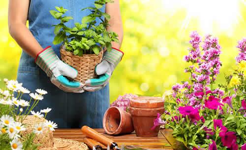Trucos para tener el mejor jardín