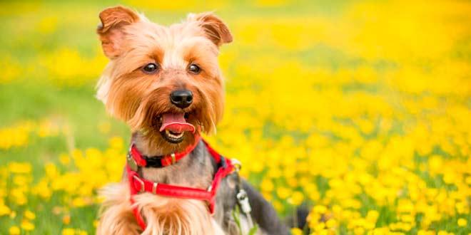 La peluquería de perros y sus características