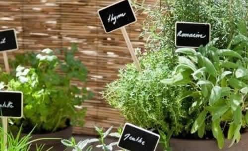 Cómo plantar hierbas aromáticas