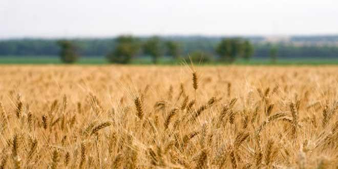 ¿Qué es la administración rural?