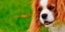 ¿Cómo elegir una peluquería para perros?