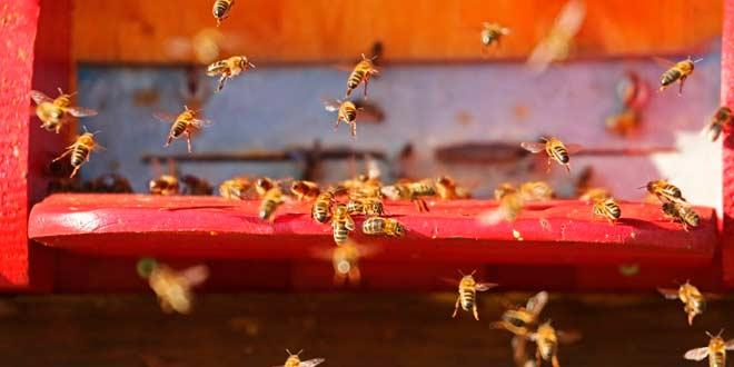 Importancia y beneficios de la apicultura