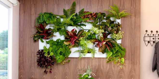 3 beneficios de los jardines verticales fude for Jardines verticales beneficios