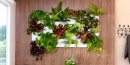 3 beneficios de los jardines verticales