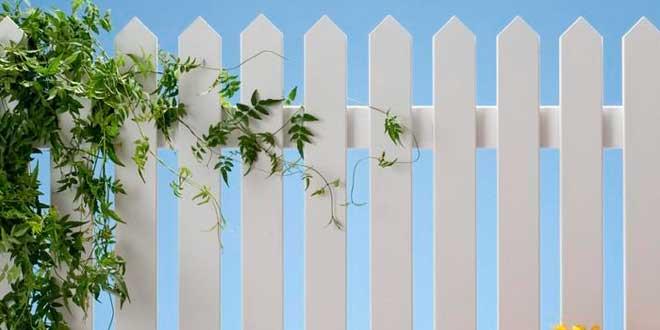Consejos de jardinería para cuidar las plantas trepadoras