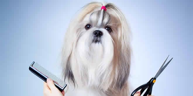 Descubre por qué es bueno llevar a tu mascota a la peluquería canina