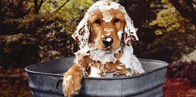 Consejos sobre la higiene de los perros