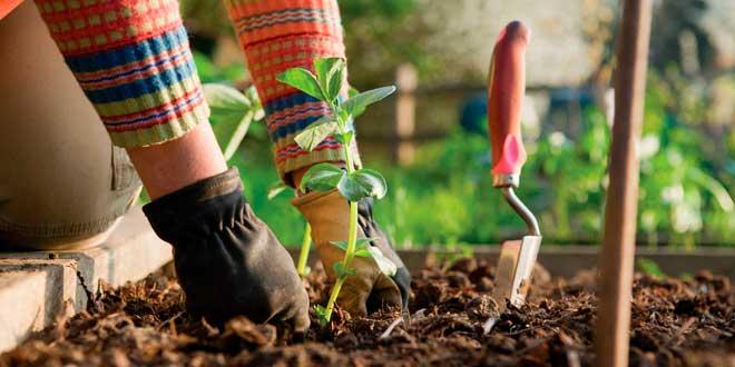 El diseño de jardines y la selección de plantas