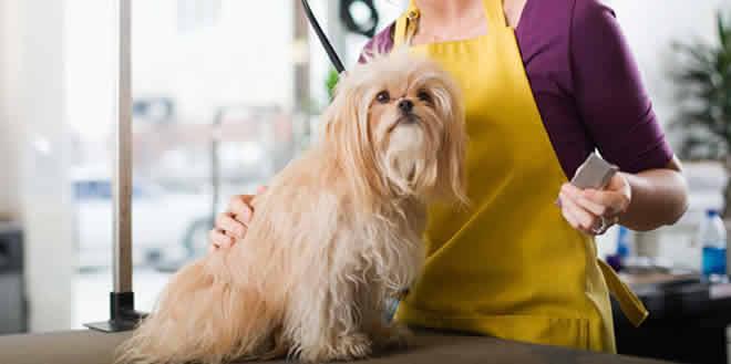 Peluquería canina: una oportunidad latente