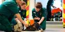 ¿Cuál es la función del paramédico?